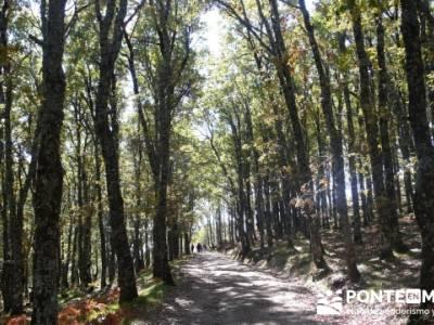 Castañar de la Sierra de San Vicente - Convento del Piélago;salidas por madrid;rutas madrid a pie